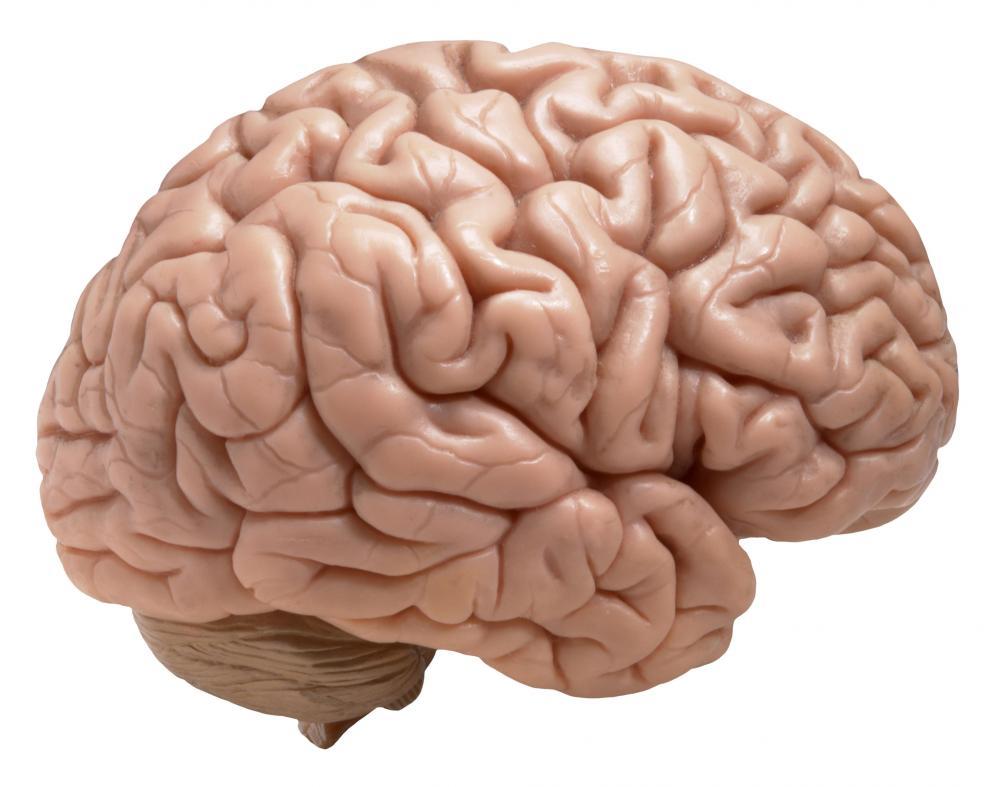 Suplemento Mental Opti Memory
